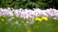 Kwiaty na łące