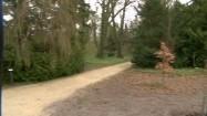 Alejki w arboretum
