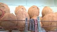 Kokosy na półce