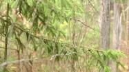 Drzewa za siatką ochronną