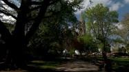 Ratusz w Wiedniu za drzewami
