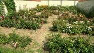 Ogródek różany