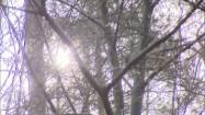 Słońce przebijające się przez gałęzie drzew
