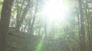 Słońce przebijające się przez drzewa