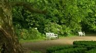 Białe ławki