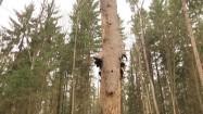 Kora odchodząca od drzewa