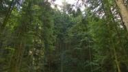 Strumień w lesie