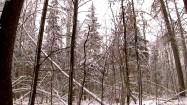 Zima w Białowieskim Parku Narodowym