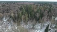 Puszcza Białowieska z lotu ptaka