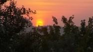 Zachód słońca widziany zza drzew