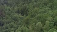 Kolejka wąskotorowa w Bieszczadach