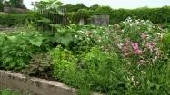Kwiaty w ogródku