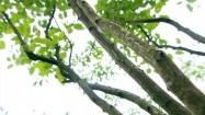 Gałęzie świdośliwy