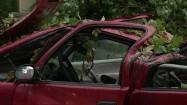 Samochód przygnieciony przez powalone drzewo
