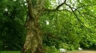 Bukszpanowy labirynt w nieborowskim parku
