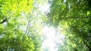 Drzewa i promienie słoneczne