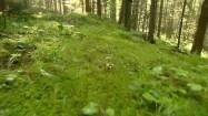 Chodzenie po lesie