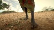 Bosa kobieta w Sudanie