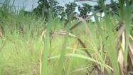 Chodzenie przez zielone pole