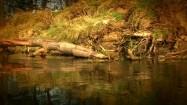 Brzeg rzeki