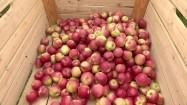 Jabłka w drewnianej skrzyni