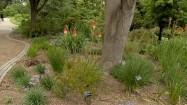 Ogród botaniczny w Sheffield