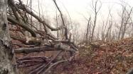 Połamane konary drzew
