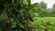 Ogród po deszczu