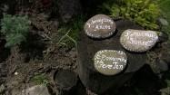 Kamienie z namalowanymi nazwami gatunków roślin