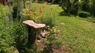 Maki w ogrodzie