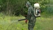 Walka z barszczem Sosnowskiego - chemiczne opryskiwanie