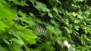 Przycinanie liści