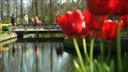 Czerwone tulipany w parku