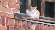 Kot na parapecie