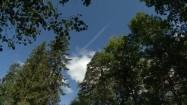 Korony drzew i błękitne niebo