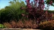 Trawy i krzewy w ogrodzie
