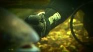 Karmienie ryb w akwarium