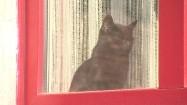 Czarny kot w oknie
