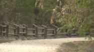 Droga szutrowa w lesie miejskim