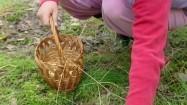 Zbieranie grzybów