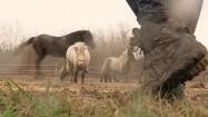 Kuce i konie na padoku
