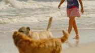Spacer z psami po plaży