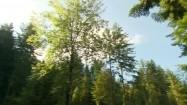 Las w słoneczny dzień