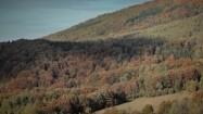 Drzewa na bieszczadzkich stokach
