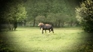 Konie biegnące po pastwisku