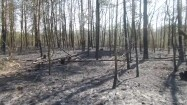 Las po pożarze