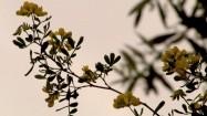 Żółte pąki kwiatów