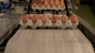 Jajka na taśmie produkcyjnej