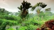 Flora Kostaryki