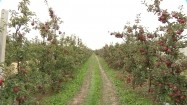 Sad jabłkowy